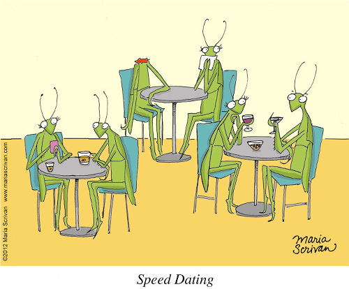 What to do during speed dating